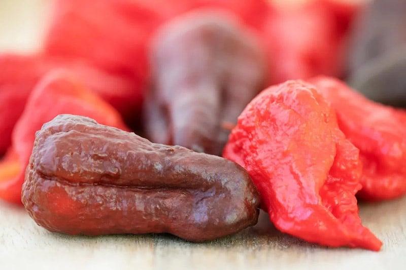 Loại ớt cay nhất trên thế giới cay đến mức có thể giết chết bạn