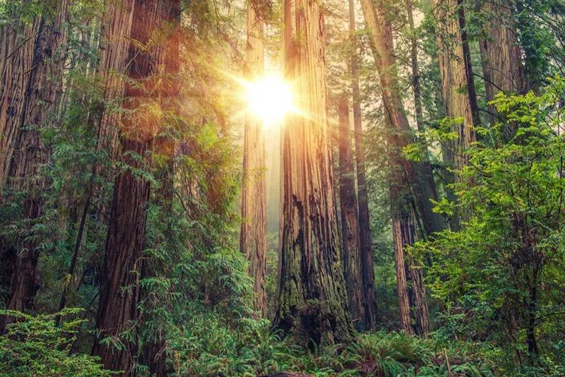 Canada sở hữu 9% diện tích rừng trên thế giới