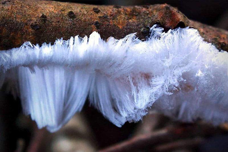 """'Hair Ice' - Cảnh tượng lạ lùng: """"Cây mọc tóc trắng"""""""